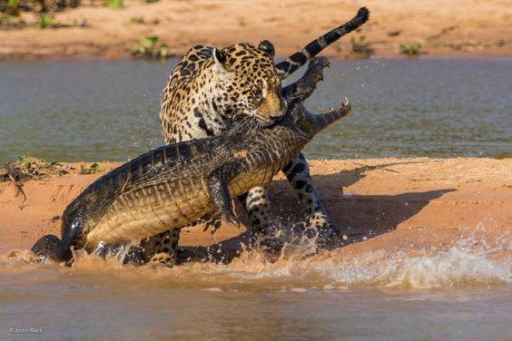 Finalists Of The 2014 Wildlife Photographer Of The Year Competition Will Leave You Wanting More - by Justin Black