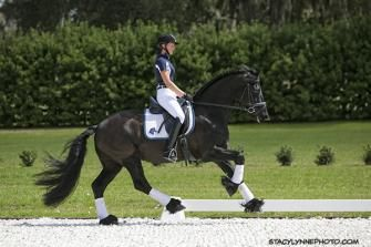 Jupiter ISF, Star - Charismatic and friendly 2011 Friesian with competitive movement and solid classical training! Wonderful, uphill canter and willing attitude. Won Star at 2014 Keuring with high marks for quality conformation and supple gaits. Excellent upper level prospect! $40,000