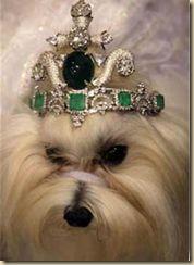 The Doggy Tiara