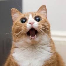 gatitos graciosos - Buscar con Google