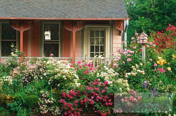 Blooming Rose Garden, Moorestown, New Jersey