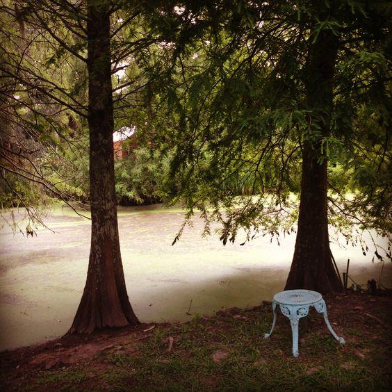 Myrtles Plantation swamp