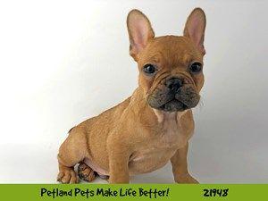 Puppies For Sale Puppies For Sale Puppy Adoption Puppies