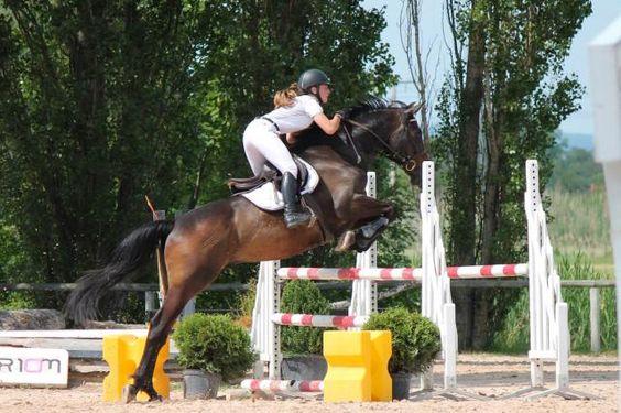 A louer cheval de CCE (285318) | Acheter ce cheval | Equirodi France