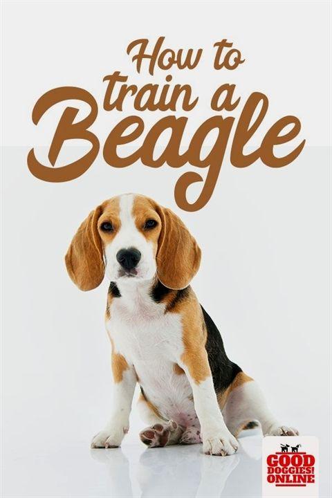 Dog Training Logo Dog Training Websites Dog Training 92807