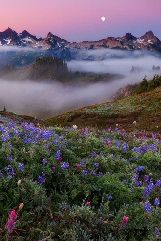 sublim-ature:  Tatoosh Range, WashingtonMiles Morgan