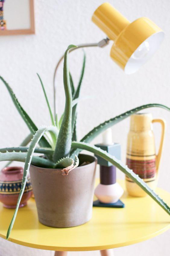 Aloë vera plant, lichte plek direct zonlicht, slaapkamer