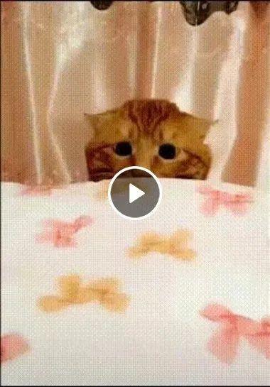 esse gatinho está com olhar de quem estava aprontando