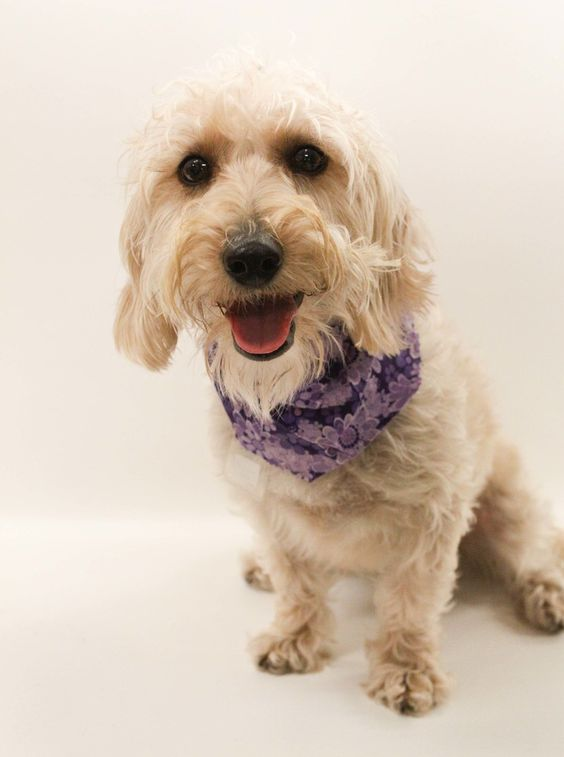 Home For Good Dogs Petfinder