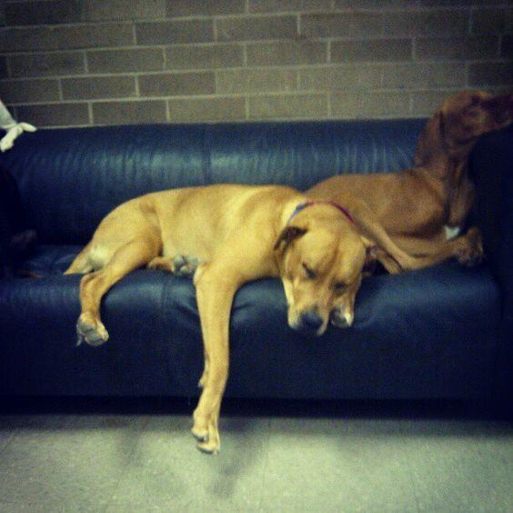 His best friend gunner at doggy day care dbf doggie best friends