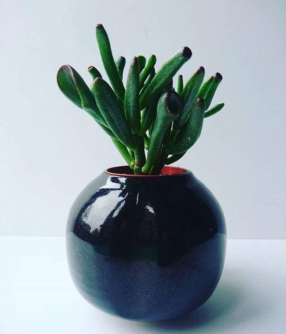 Hello gorgeous little pot! #houseplant #succulents #ceramics #potplant #handthrown #pottery #glaze #plant