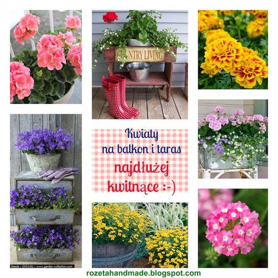 Jakie Kwiaty Posadzic W Maju By Kwitly Do Poznej Jesieni Czyli Kwiaty Na Balkon I Taras Najdluzej Kwitnace D Balcony Flowers Flowers Plants