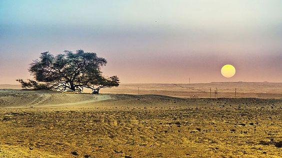 10 درخت مشهور جهان را از نزدیک ببینیم