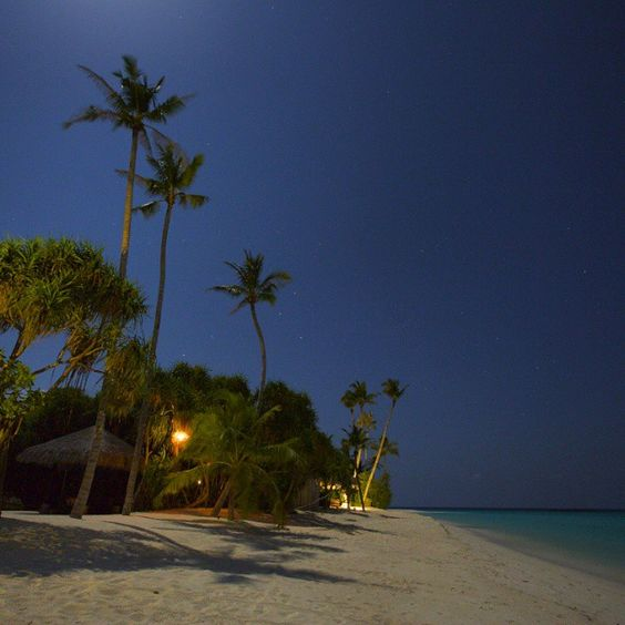 Moonlit beach #beach #velaaprivateisland #nightphotography #moonlight #palmtrees #incrediblebeaches #beautifuldestinations #mymaldives #maldivesislands #maldives #mymaldives #islandholiday #beachholiday #wanderlust #worldresorts #thegoldlist #worlderlust #beaches_n_resorts #canon5dmarkiii #worlderluxe