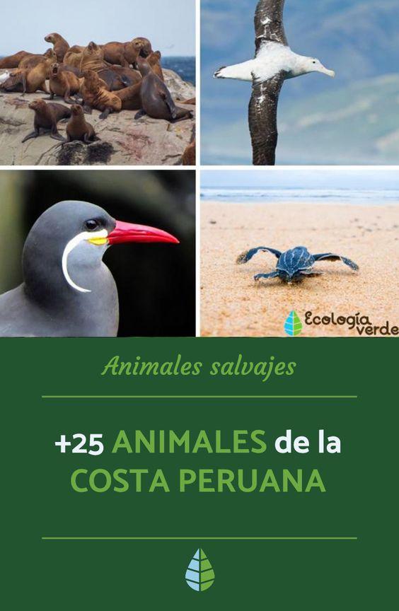 25 Animales De La Costa Peruana Animals