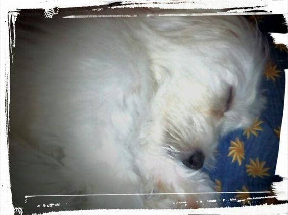 Durmiedo parece un angel