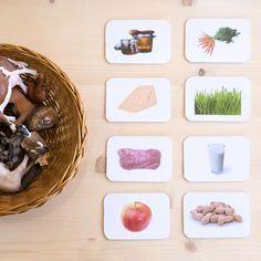 Artwork: What animals eat