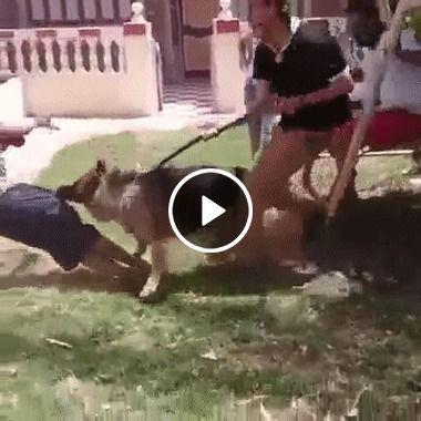Quase que o cachorro castrou o rapaz para não ter mais filho