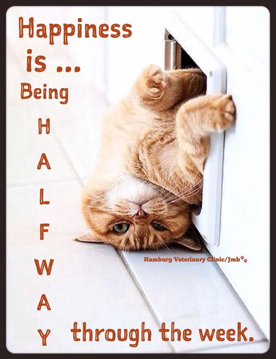 Wednesday Humor | Happy Hump Day | Mid week blues | Animal Humor | Cat funny | Cute cat | Halfway to the weekend! We are halfway through the week AND that much closer to the weekend. Now that's my kind of HAPPINESS!!   Happy Wednesday, friends!