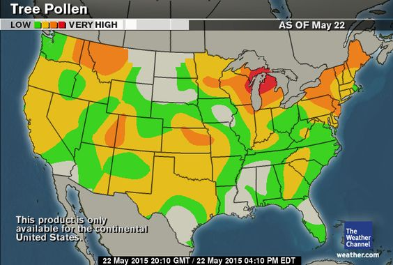 Allergy Tracker For Washington DC Weathercom Trees And Maps - Us ragweed pollen map