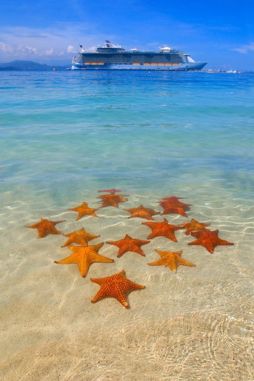 Starfish in Labadee. #caribbean