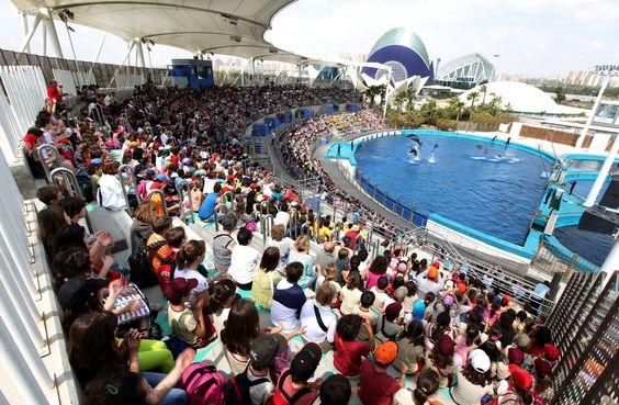 Dernières nouvelles de Oceanogràfic Valencia : Actualités, naissances et…
