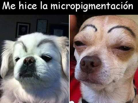 Pin By Gongju Miso On Momentos Divertidos D I Love Dogs Dog Face Dog With Eyebrows