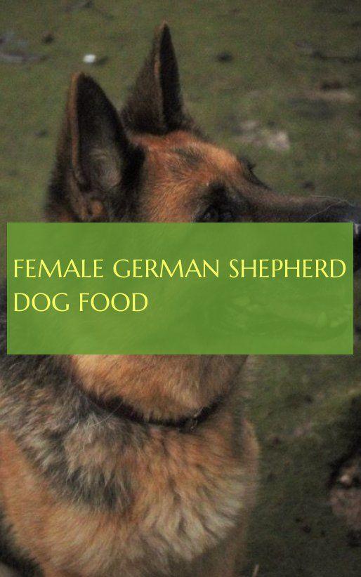 Weibliches Schaferhundefutter Female German Shepherd Dog Food