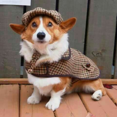 Oh My Corgi On Pet Costumes For Dogs Corgi Pet Costumes