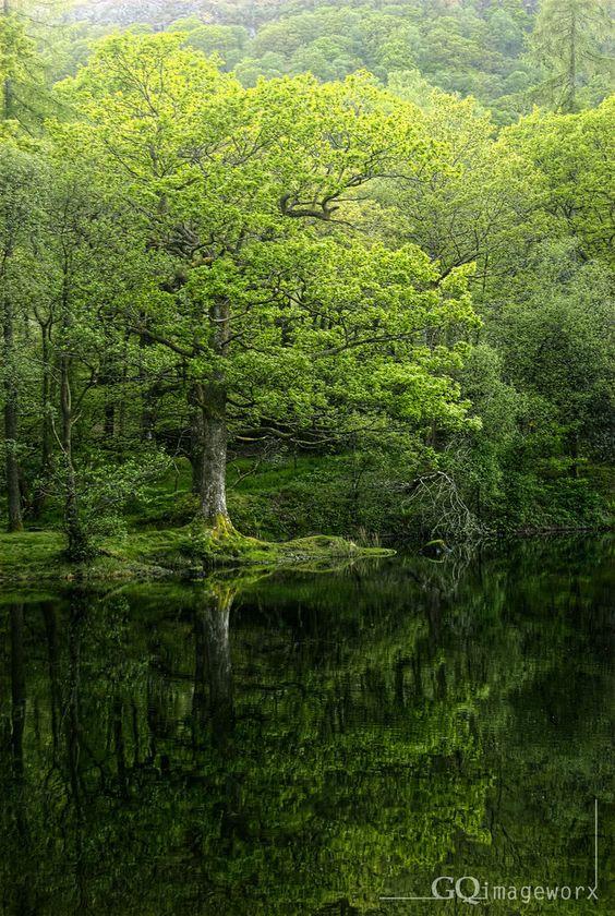 Yew tree tarn, Cumbria, England by GQimageworx