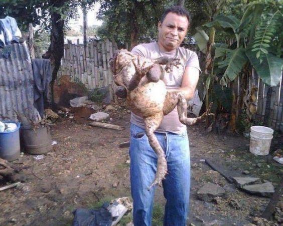 big toad - Google 検索