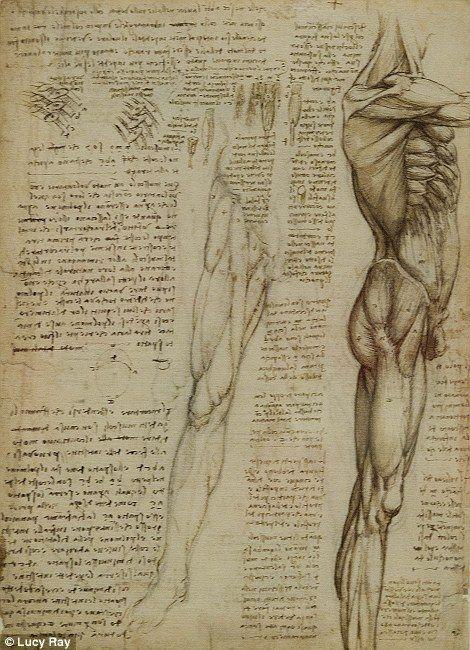 Los Musculos Del Tronco Y La Pierna Arte De Anatomia Anatomia Artistica Dibujo Anatomico