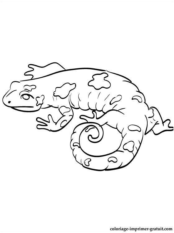 13 Decent Salamandre Coloriage Pictures Coloriage Dessin