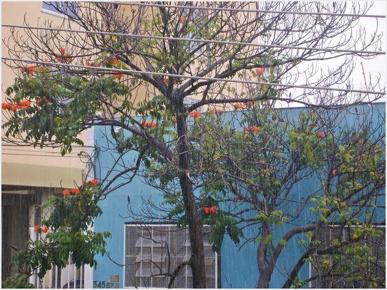 chuva, BH 2013