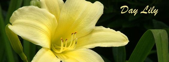 http://www.fbcovers99.com/flowers.htm Make Your Profile More Beautiful