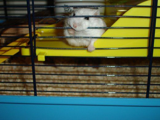 The Best Hamster Cage Size How Big Should It Be In 2020