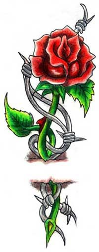 roses tattoo designs   classic rose and barbed wire tattoo design