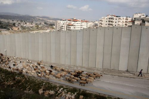 from-around-the-globe:  A Palestinian shepherd leads his flock in front of Israel's apartheid wall in east Jerusalem.  AHMAD GHARABLI/AGENCE FRANCE-PRESSE/GETTY IMAGES