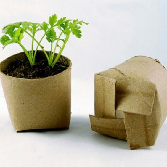 Empty toilet paper roll turned into a planter for seeds!