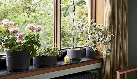 HAY 鉢カバー コーディネート例 観葉植物