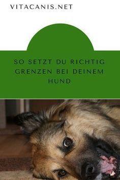 So Setzt Du Richtig Grenzen Bei Deinem Hund Hunde Hunde