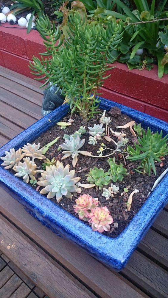 Summer Gardening - Start a Succulents Nursery - Nature Play WA