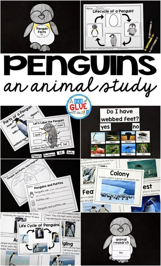 Engage your class in an exciting hands-on experience learning all about penguins! This Penguins: An Animal Study is perfect for science in Preschool, Pre-K, Kindergarten, First Grade, and Second Grade classrooms and packed full of inviting science activities.  Students will learn about the difference between penguins and puffins, animals with and without webbed feet, parts of a penguin, and a penguin's life cycle. When students are done they can complete a penguin research project. This pack…