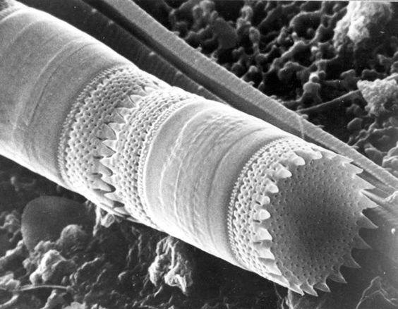 plankton*