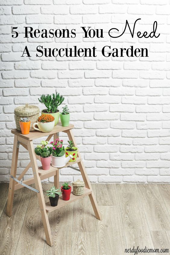 5 Reasons You need a Succulent Garden