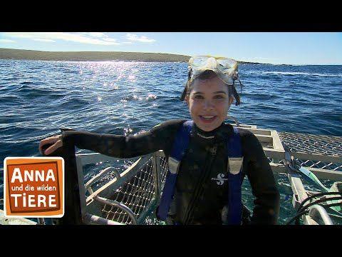 Mit Dem Hai Unter Wasser Doku Reportage Fur Kinder Anna Und Die Wilden Tiere Youtube In 2020 Wilde Tiere Tiere Haie