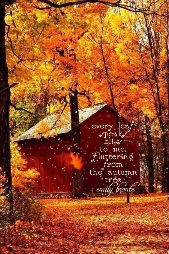 Autumn beauty everything fall pinterest for Paesaggi autunnali per desktop