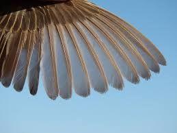 punta de ala de ave - Buscar con Google