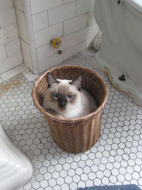 StormHaven basket cat.
