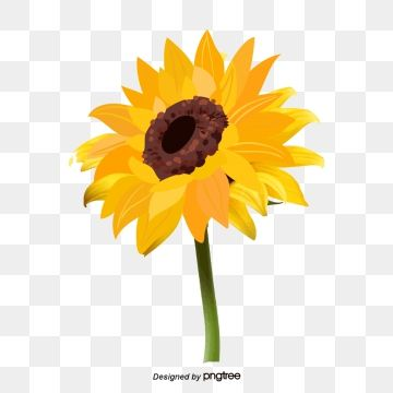 Sunflower Clipart Sunflower Yellow Flower Flowers And Plants Cartoon Hand Drawing Sunflower Vector Vec In 2020 Flower Png Images Flower Painting Sunflower Illustration